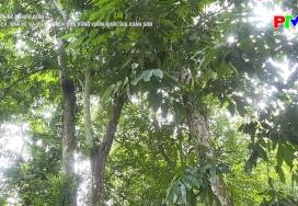 Quản lý, bảo vệ và phát triển bền vững Vườn Quốc gia Xuân Sơn