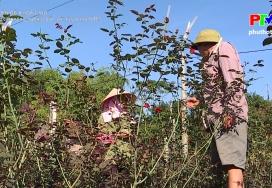 Tái cơ cấu nông nghiệp gắn với xây dựng nông thôn mới