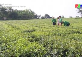 Sức ép từ sử dụng thuốc bảo vệ thực vật