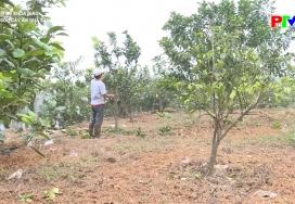 Chăm sóc cây ăn quả sau thu hoạch