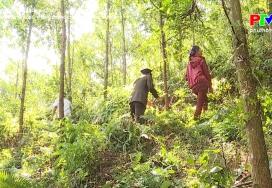 Chủ động bảo vệ rừng phòng chống cháy rừng mùa hanh khô