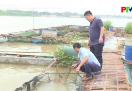 Công nghệ và đời sống - Công nghệ sinh sản nhân tạo và nuôi thương phẩm cá lăng chấm