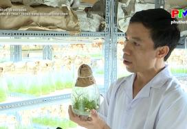 Công nghệ và đời sống: Ứng dụng kỹ thuật trồng rừng keo lai thâm canh