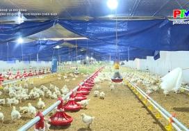 Công nghệ và đời sống: Ứng dụng cơ giới hóa trong chăn nuôi