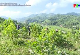 Áp dụng KHKT trong phát triển kinh tế vườn, rừng
