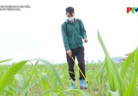 Chăm sóc cây trồng vụ Xuân