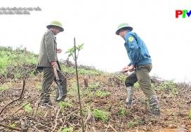 Vùng cao vào vụ mùa trồng rừng