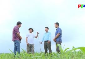 Đẩy nhanh tiến độ cấp giấy quyền sử dụng đất