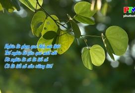 Đến với bài thơ hay - Ghen