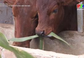 Giảm nghèo bền vững cho người dân tự phát triển chăn nuôi