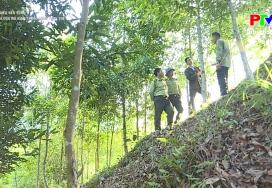 Hiệu quả mô hình trồng rừng thay thế