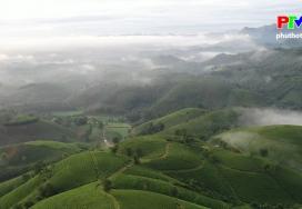 Khoảnh khắc cuộc sống - Buổi sáng trên đồi chè Long Cốc