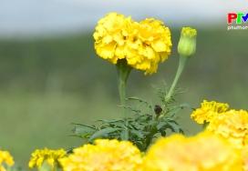 Khoảnh khắc cuộc sống - Hoa cúc vàng mùa Thu