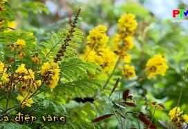 Khoảnh khắc cuộc sống - Hoa điệp vàng