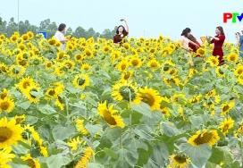 Khoảnh khắc cuộc sống - Hoa mặt trời