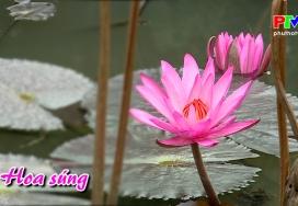 Khoảnh khắc cuộc sống - Hoa Súng