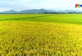 Khoảnh khắc cuộc sống - Hương lúa