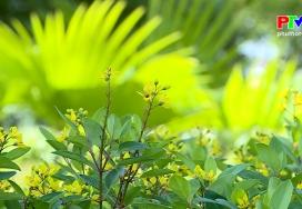 Khoảnh khắc cuộc sống - Sắc vàng tươi của cánh hoa kim đồng