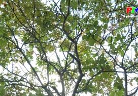 Khoảnh khắc cuộc sống: Mùa lá rụng