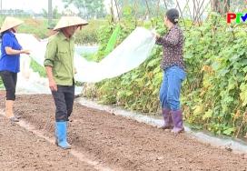 Khử trùng đất bằng năng lượng mặt trời trong sản xuất rau an toàn