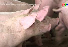 Kiểm tra, giám sát vệ sinh thú y tại các cơ sở chăn nuôi, giết mổ động vật