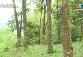 Phát triển rừng trồng gỗ lớn