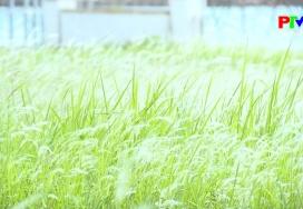 Khoảnh khắc cuộc sống: Sắc trắng tinh khôi bên hồ công viên Văn Lang
