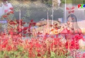 Khoảnh khắc cuộc sống - Sắc đỏ hoa xác pháo