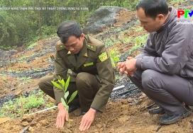 Kỹ thuật trồng rừng vụ Xuân