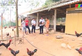 Liên kết sản xuất, hướng phát triển nông nghiệp bền vững