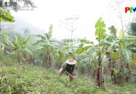 Chuyển đổi cây trồng trên đất đồi