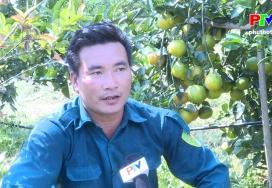 Mô hình trồng cam Cao Phong trên đất đồi Thanh Sơn