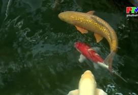 Mong cho cá chép hóa rồng