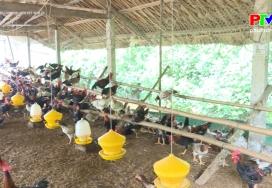 Muôn cách làm giàu - Liên kết nuôi gà