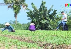 Nâng cao chất lượng giá trị trong sản xuất rau