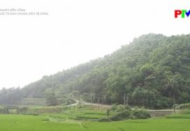 Hiệu quả từ giao khoán bảo vệ rừng