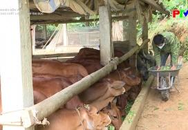 Nâng cao chất lượng đàn gia súc