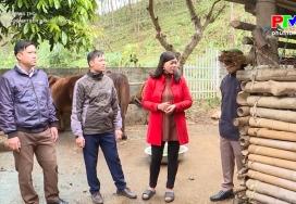 Nông nghiệp Phú Thọ: Phòng dịch bệnh trên đàn vật nuôi
