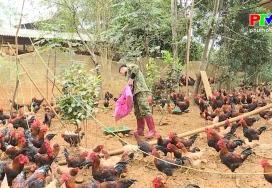 Phòng chống rét cho vật nuôi