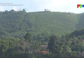 Kỹ thuật chuyển hóa rừng trồng gỗ nhỏ sang rừng gỗ lớn