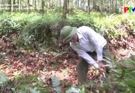 Tăng cường công tác phòng chống cháy rừng