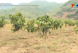 Nông thôn mới Tây Bắc - Khó khăn trong thực hiện chương trình OCOP ở các huyện miền núi
