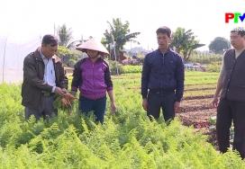 Sản xuất phân hữu cơ từ phương pháp lên men hiếu khí trong sản xuất rau an toàn