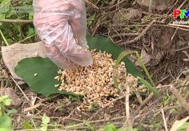 Biện pháp phòng trừ sâu, bệnh hại cây trồng vụ xuân