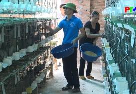 Nông sản an toàn - Mô hình nuôi chim bồ câu Pháp