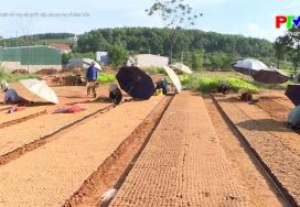 Nông thôn mới Phú Thọ: Giải quyết việc làm cho phụ nữ nông thôn