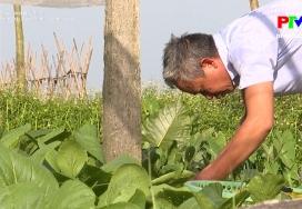 Nông thôn mới Phú Thọ: Nông dân sản xuất kinh doanh giỏi