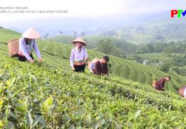 Nông thôn mới Phú Thọ - Phát triển du lịch gắn với xây dựng nông thôn mới