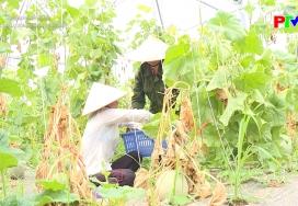 Xây dựng nông thôn mới - Tăng giá trị cây trồng từ khoa học kỹ thuật
