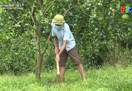 Nông thôn mới Phú Thọ - Mô hình khu vườn kiểu mẫu